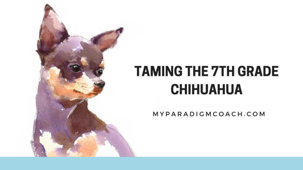 Taming the 7th Grade Chihuahua